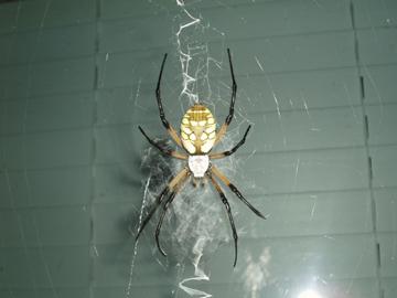 spidera.jpg